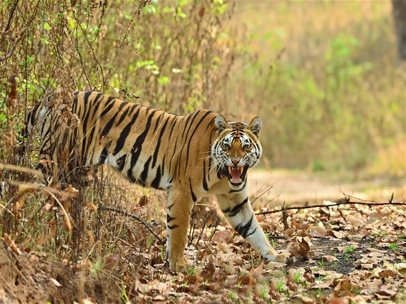 Wildlife Tour To Madhya Pradesh 2