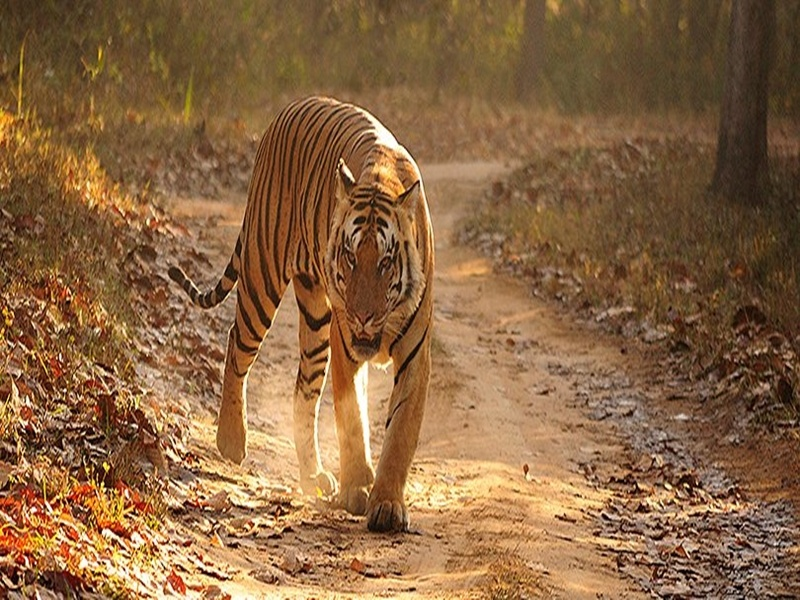 Wildlife Tour To Madhya Pradesh 1